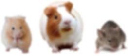 Small Animals Hero Banner.jpg