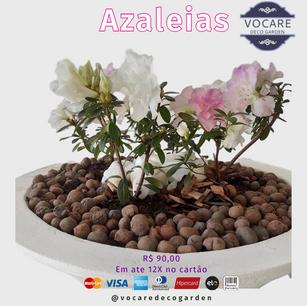 AZALEIA 80.png