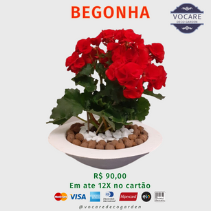 BEGONHA 90.png