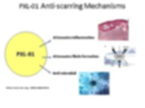 PXL01 Antiscarring mechanisms.jpg