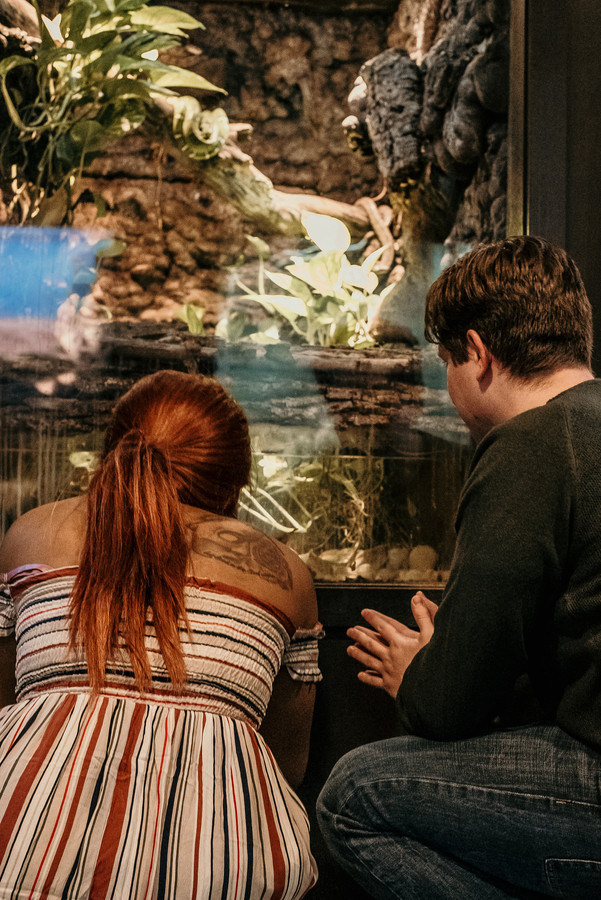 Couple looking at animals together at a zoo in Pennsylvania