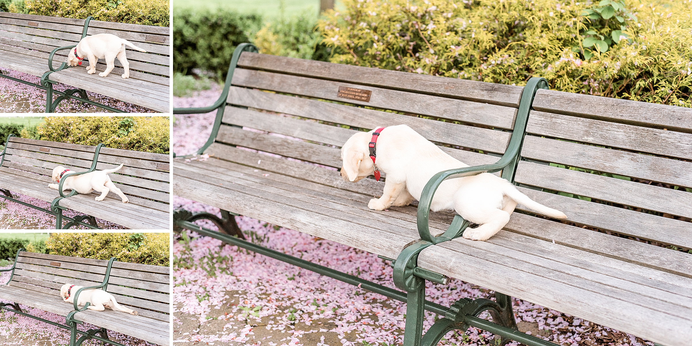 Cute puppy on a bench in a park in Verona NJ