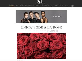 Rosa Unica : une ode à la Rose