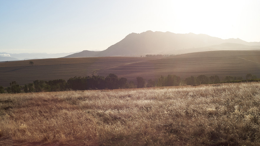Nativo Wine of Hughes Family Wines Vineyard in the Swartland of South Africa photographed by Naima Maleika