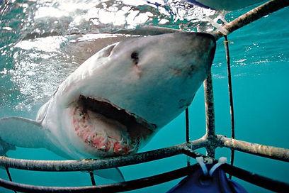 7a_gansbaai-southafrica_scuba-diving.jpg