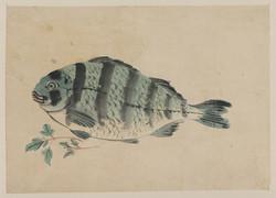Blue Striped Fish