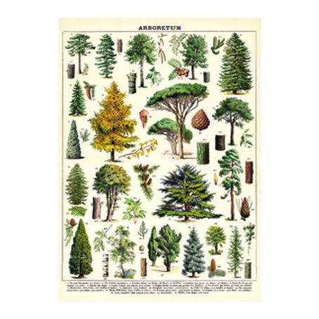 Decorative Italian Papers - Arboretum