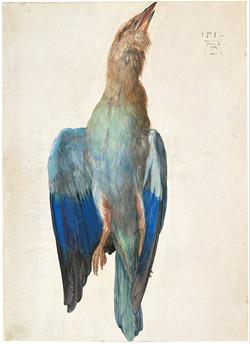 Dead Blue Roller, 1512