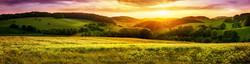 Green Field Sunset