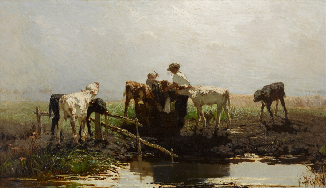 Calves at a Trough