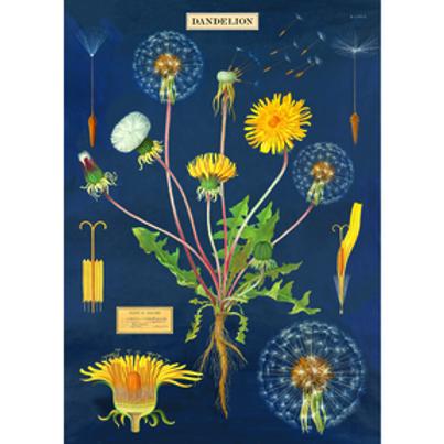 Decorative Italian Papers - Dandelion