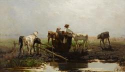 Calves at a Trough