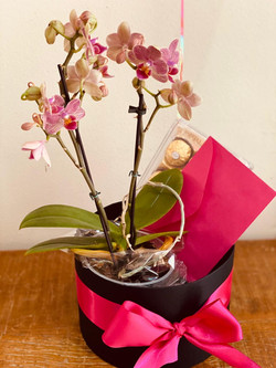 flores e chocolate
