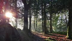 Sunburst in Silverdale Woods.jpg