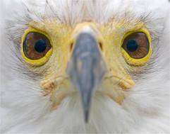 Eagle eyed.jpg