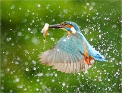 2. flying fish.jpg