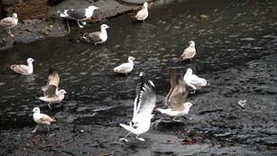 Gulls on shoreline.jpg