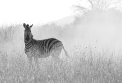 South African Stripes.jpg