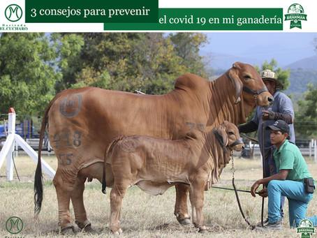 3 consejos para prevenir el Covid-19 en mi ganadería