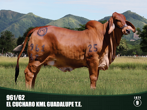 961/62 .EL CUCHARO KML GUADALUPE T.E