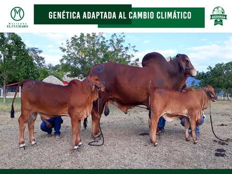 Genética Adaptada al Cambio Climático
