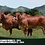 Thumbnail: RG MILLONARIO REGINA T.E  -  137/4 . RG MAXMILLION ANTONELLA T.E - 214/4