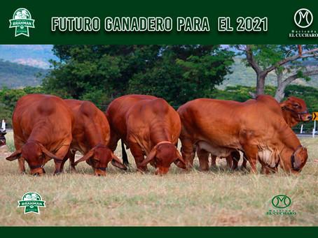FUTURO GANADERO PARA  EL 2021