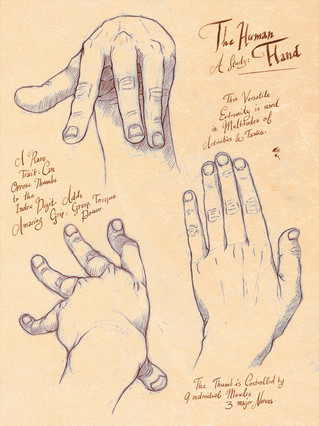 Life Drawing: Hands and Feet Portfolio