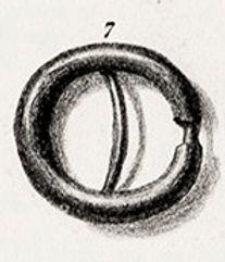 Pl.41,7 .jpg