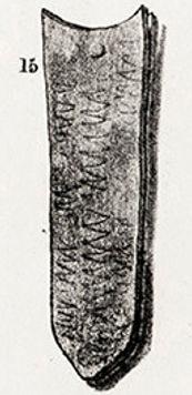 Pl.41,15 .jpg