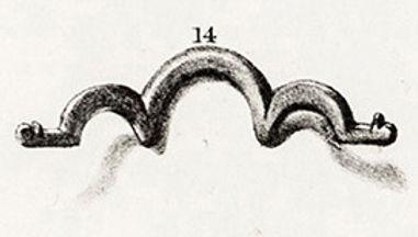 Pl.41,14 .jpg