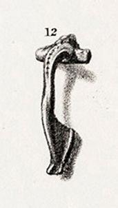 Pl.41,12 .jpg