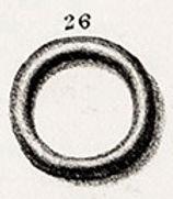 Pl.41,26 .jpg