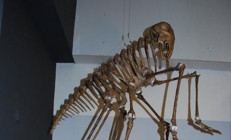 Grosaurus