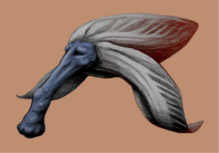 Bestiář ilustrace 1