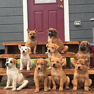 May Adoptions