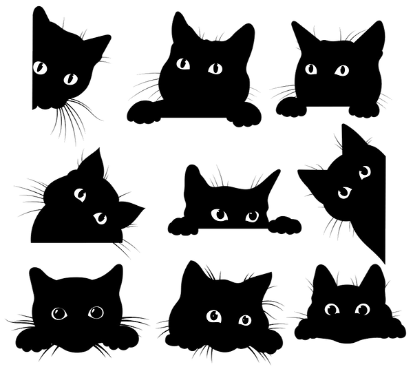 27169268%2520cats_edited_edited.png