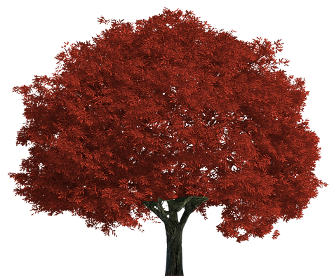 red tree bmw -25% .png