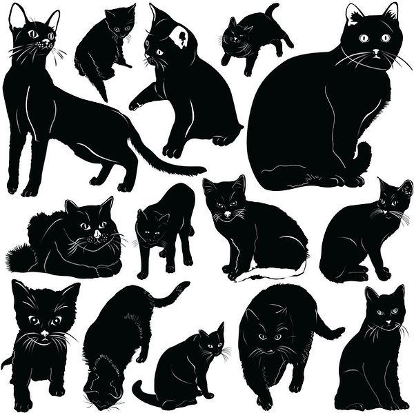 Cats%20394525_edited.jpg