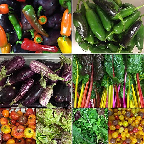 Just a few of the beautiful varieties of