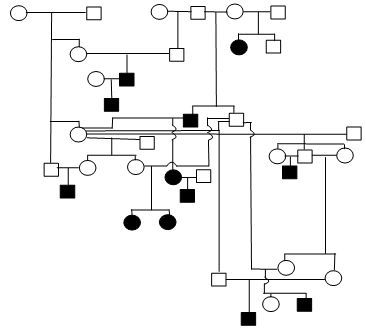 Belgian tervuren sample pedigree.jpg