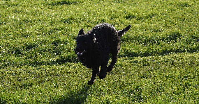 Haru Mudi running