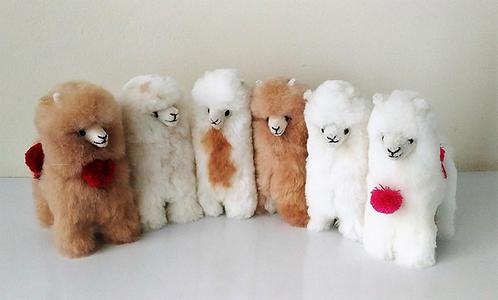 Alpaca Pompom