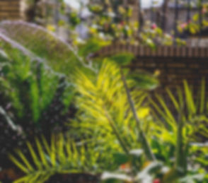 irene-davila-O1PHdGGcljQ-unsplash_edited.jpg
