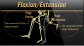 felx extension pic.png