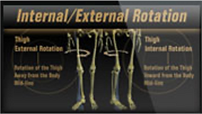 internal external rotation pic.png
