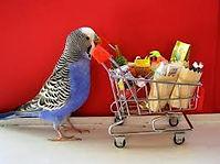parakeet shopping