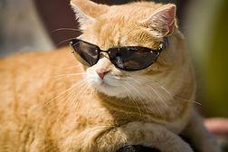 cool-cat.jpg