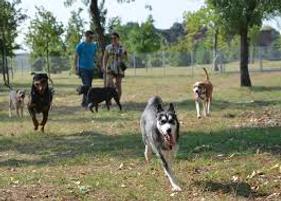 dog park1.png