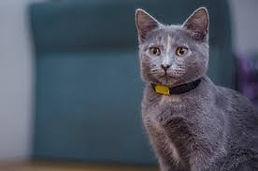 cat with collar.jpg